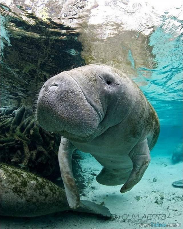 belas-fotografias-subaquaticas-36