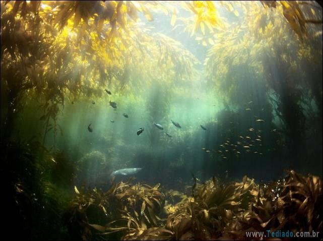 belas-fotografias-subaquaticas-39