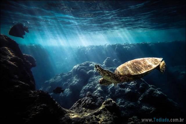 belas-fotografias-subaquaticas-42