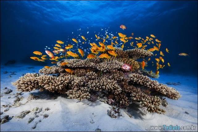belas-fotografias-subaquaticas-43