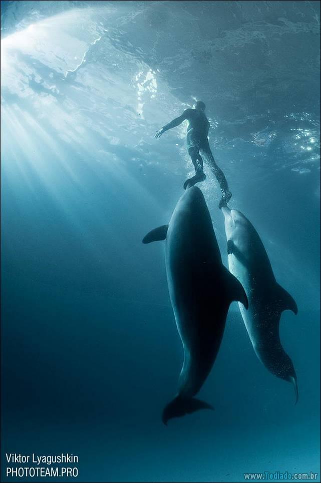 belas-fotografias-subaquaticas-44