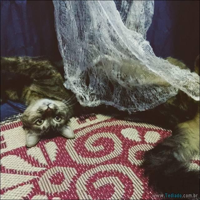 fotos-de-gatos-02