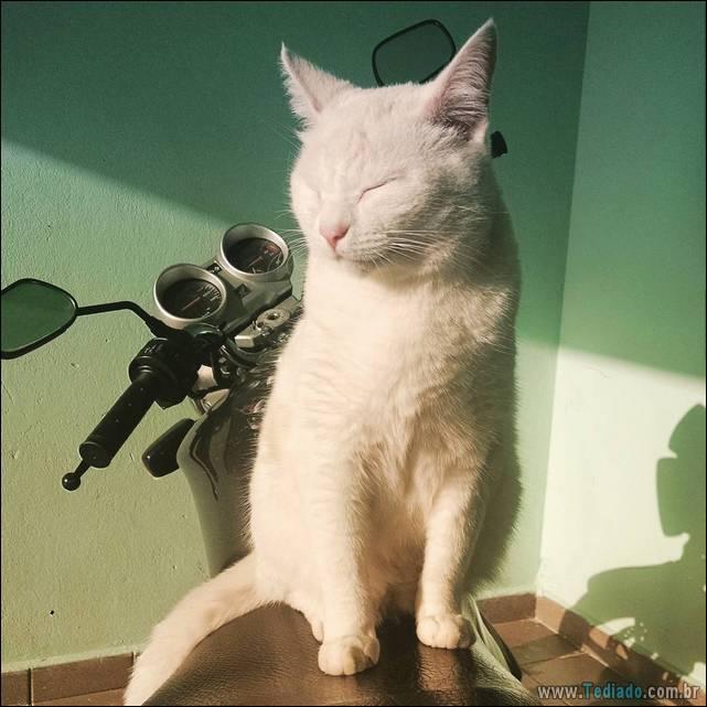 fotos-de-gatos-04