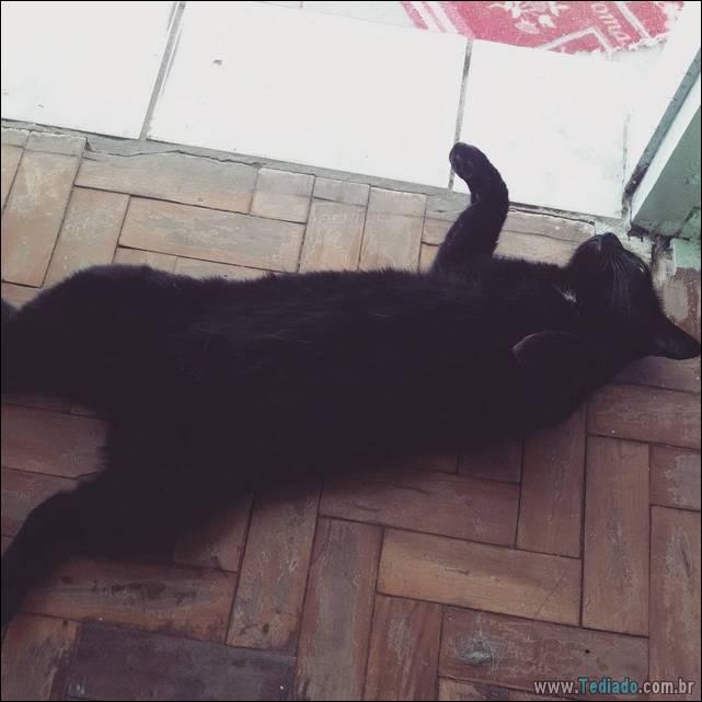 fotos-de-gatos-05