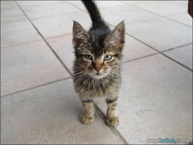 fotos-de-gatos-06