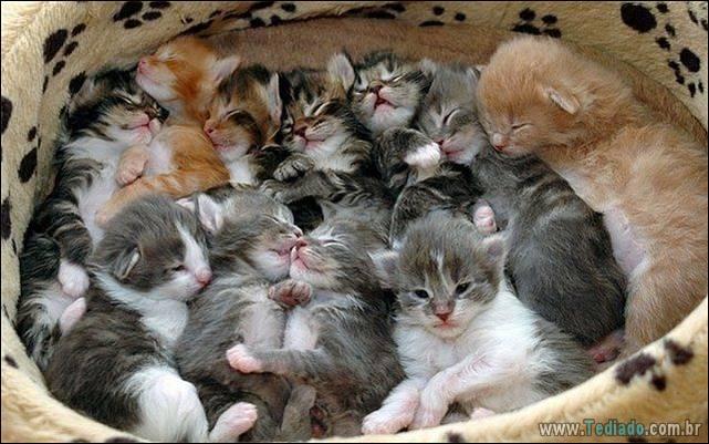 fotos-de-gatos-07
