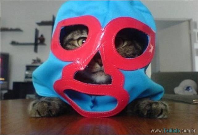 fotos-de-gatos-08