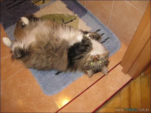 fotos-de-gatos-10