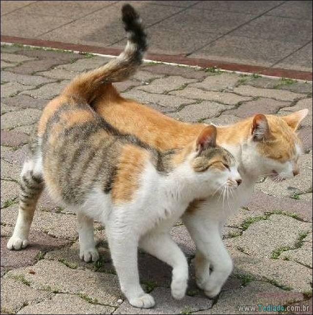 fotos-de-gatos-12