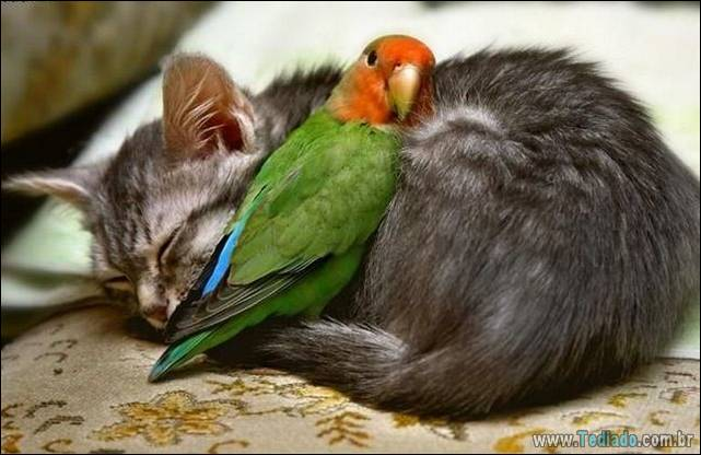 fotos-de-gatos-13
