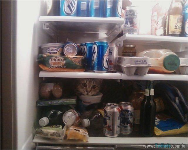 fotos-de-gatos-16