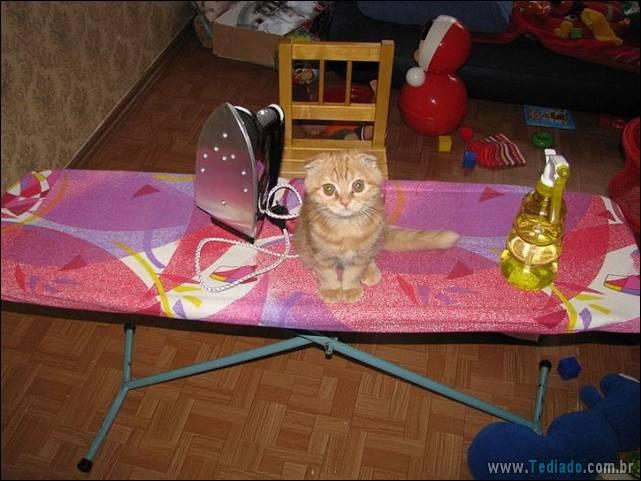 fotos-de-gatos-17