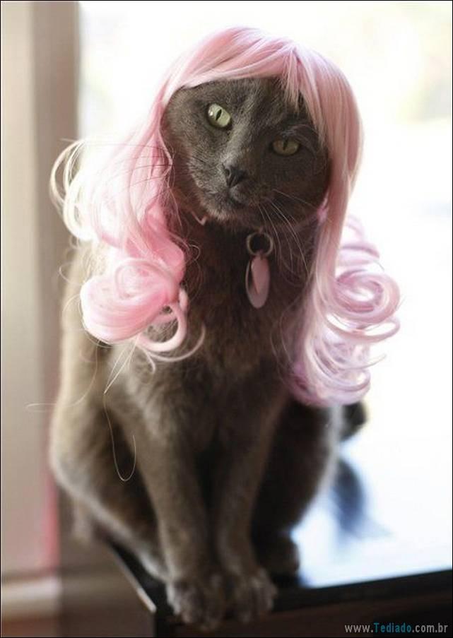 fotos-de-gatos-19