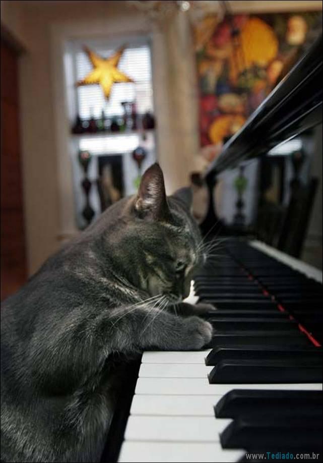 fotos-de-gatos-20