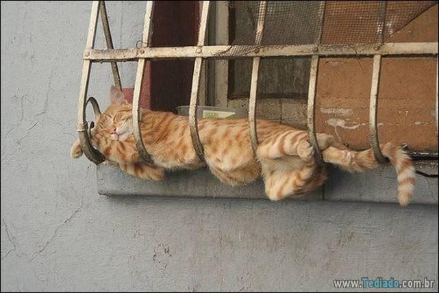 fotos-de-gatos-23