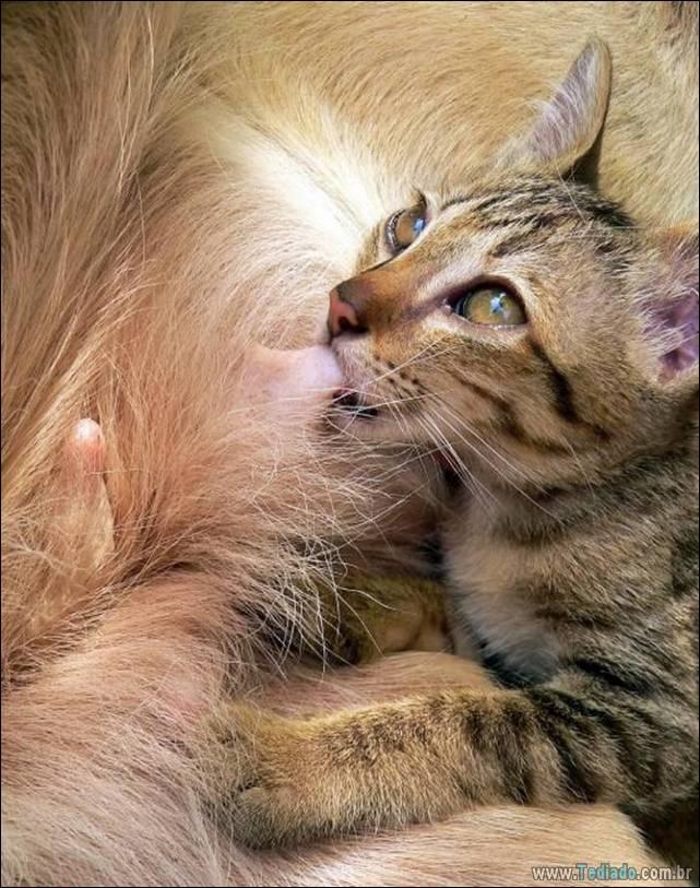 fotos-de-gatos-24