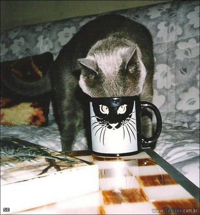 fotos-de-gatos-26