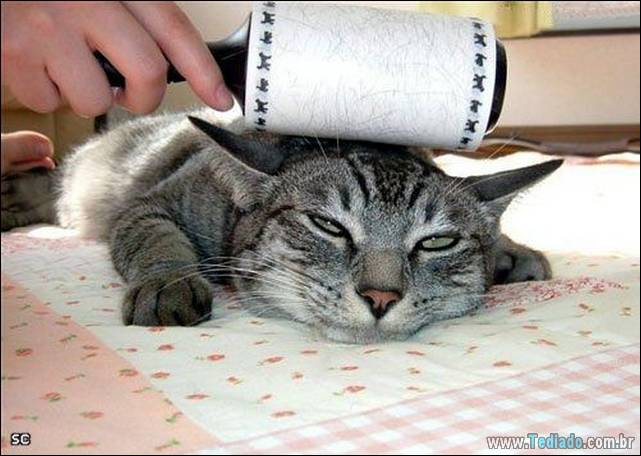 fotos-de-gatos-27