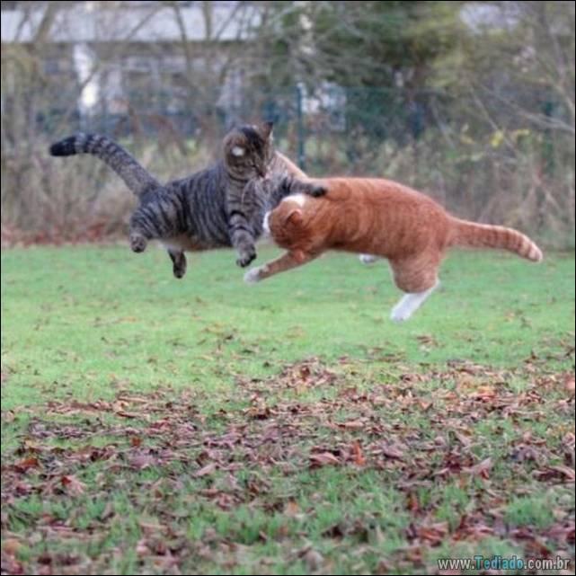 fotos-de-gatos-29