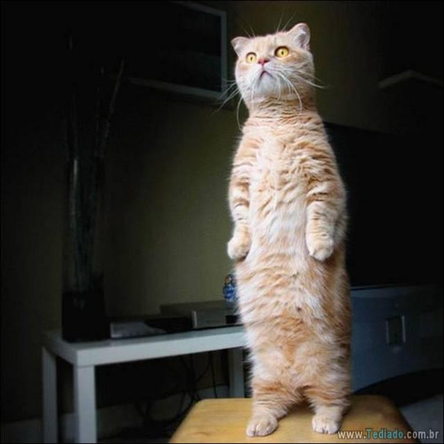 fotos-de-gatos-30