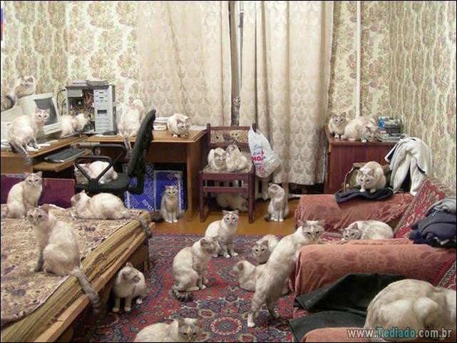 fotos-de-gatos-32