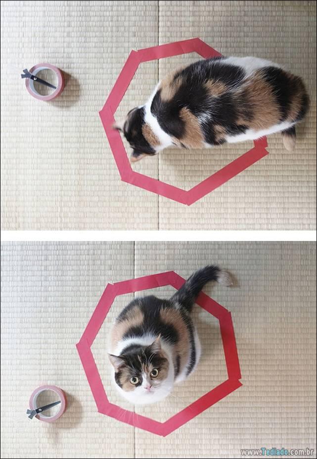 a-incrivel-logica-dos-gatos-07