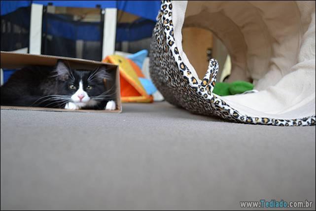 a-incrivel-logica-dos-gatos-10
