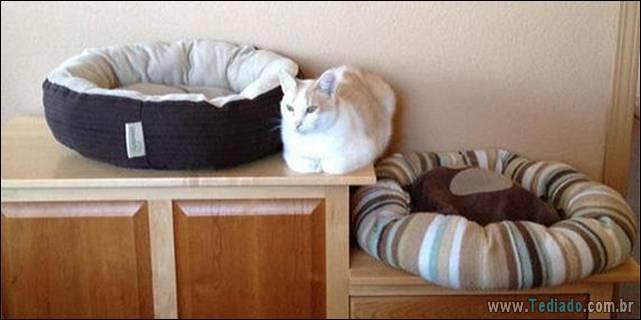 a-incrivel-logica-dos-gatos-14