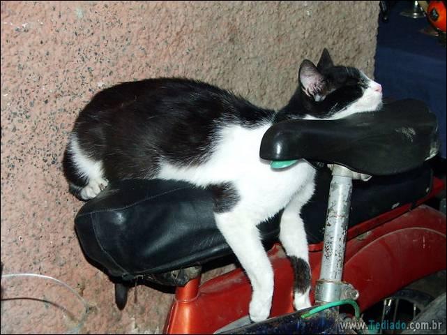 a-incrivel-logica-dos-gatos-25