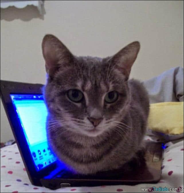 gato-e-seus-espacos-14