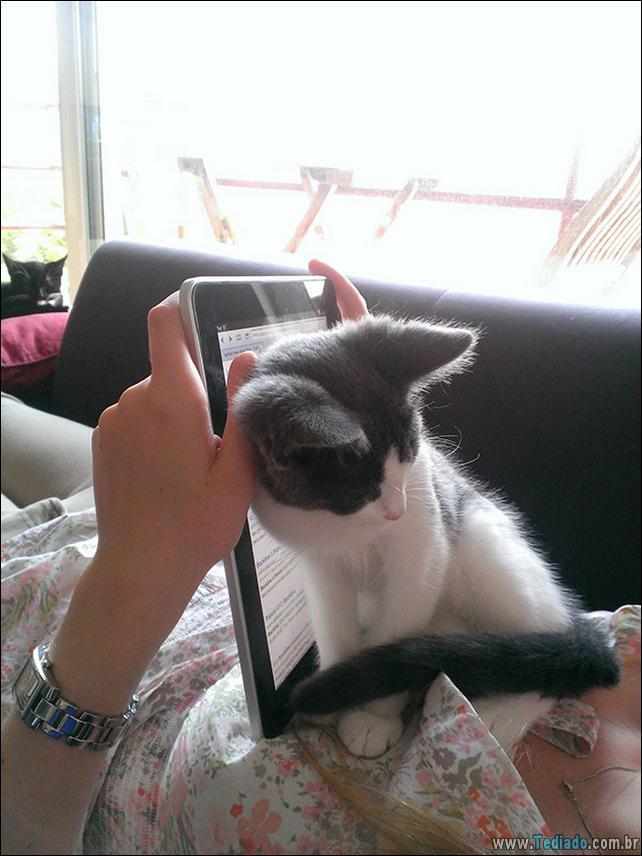 gato-e-seus-espacos-16