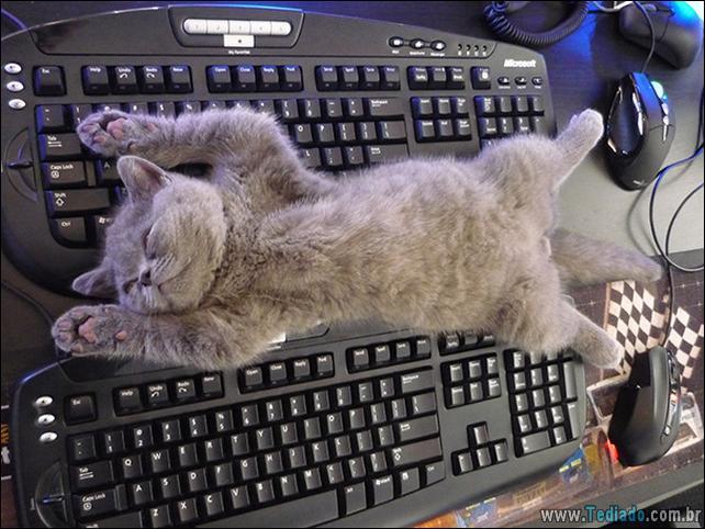 gato-e-seus-espacos-18