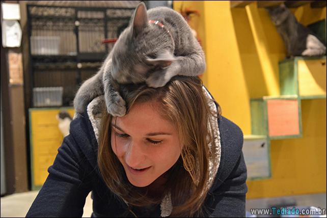 gato-e-seus-espacos-21