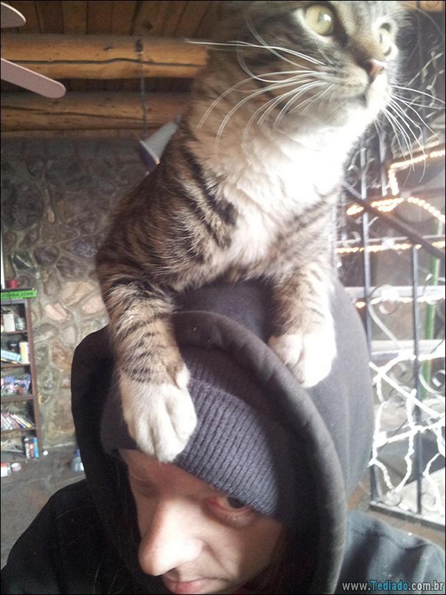 gato-e-seus-espacos-22