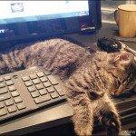 37 Gatos que não se preocupam com o seu espaço pessoal