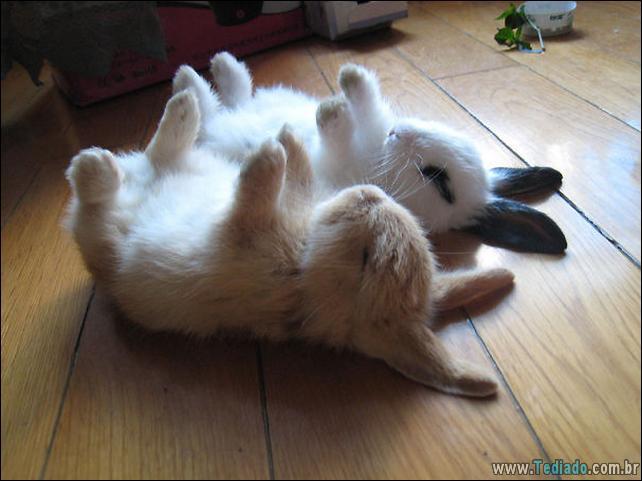 os-coelhos-mais-fofos-do-mundo-01