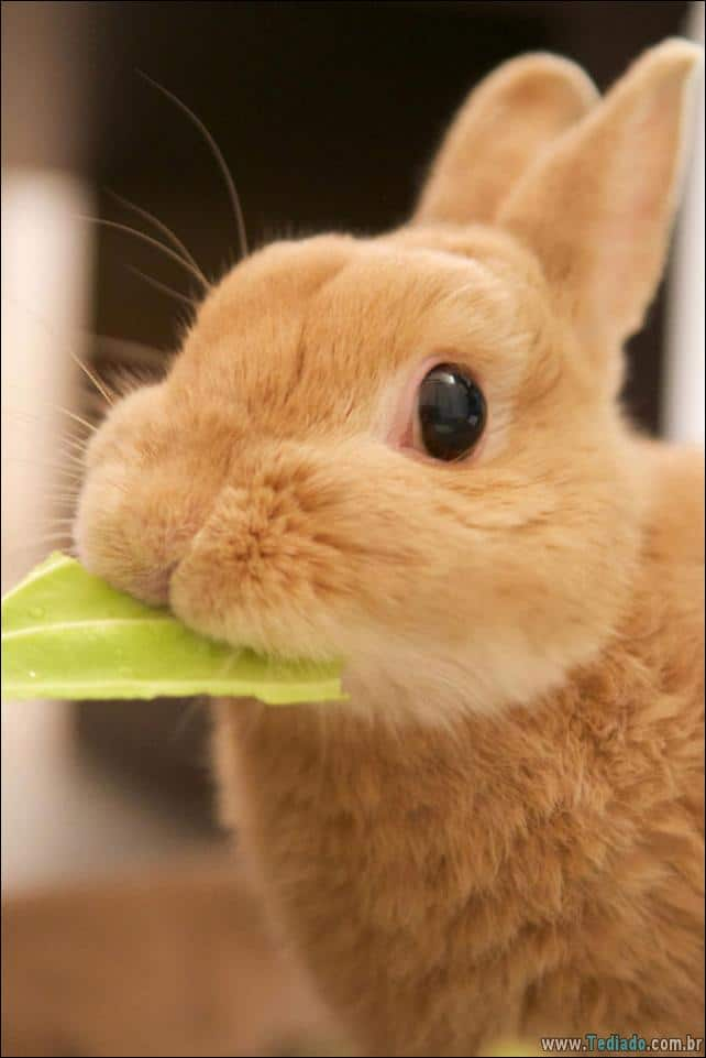 os-coelhos-mais-fofos-do-mundo-02