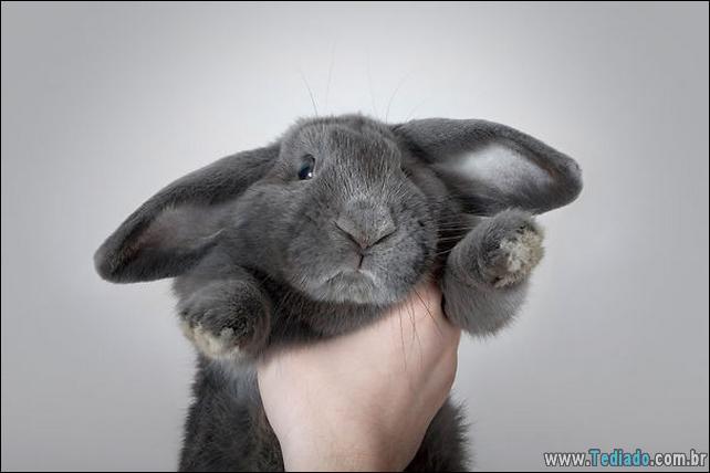 os-coelhos-mais-fofos-do-mundo-03