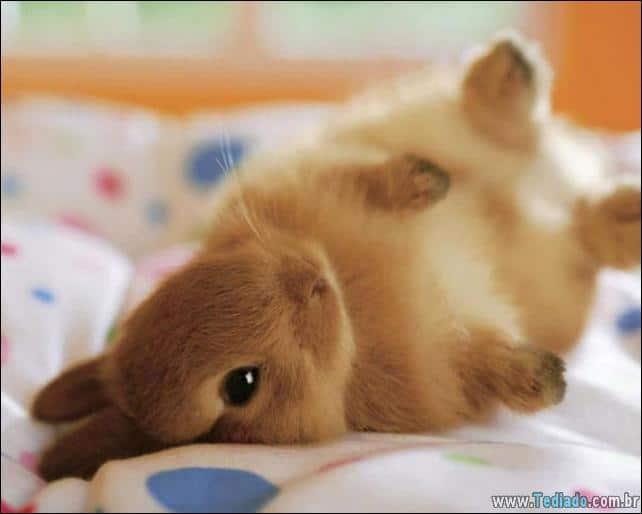 os-coelhos-mais-fofos-do-mundo-05