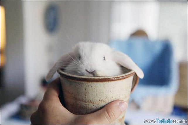 27 coelhos mais fofos do mundo