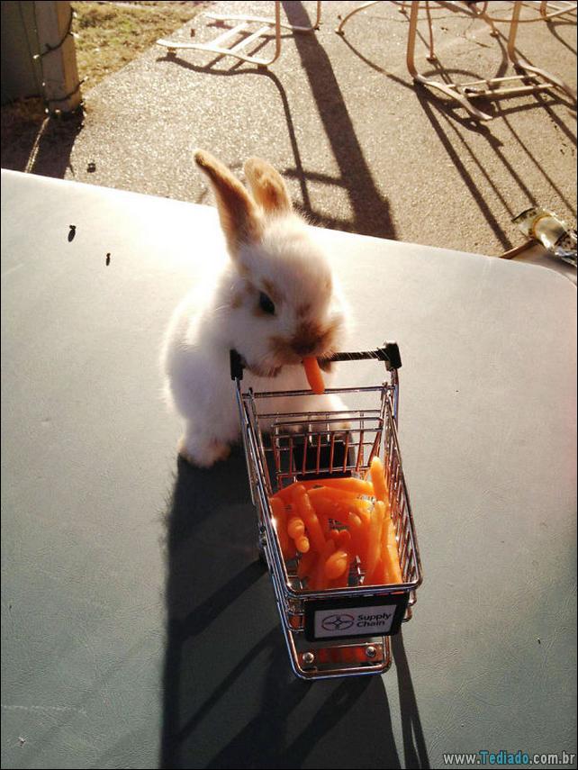 os-coelhos-mais-fofos-do-mundo-07