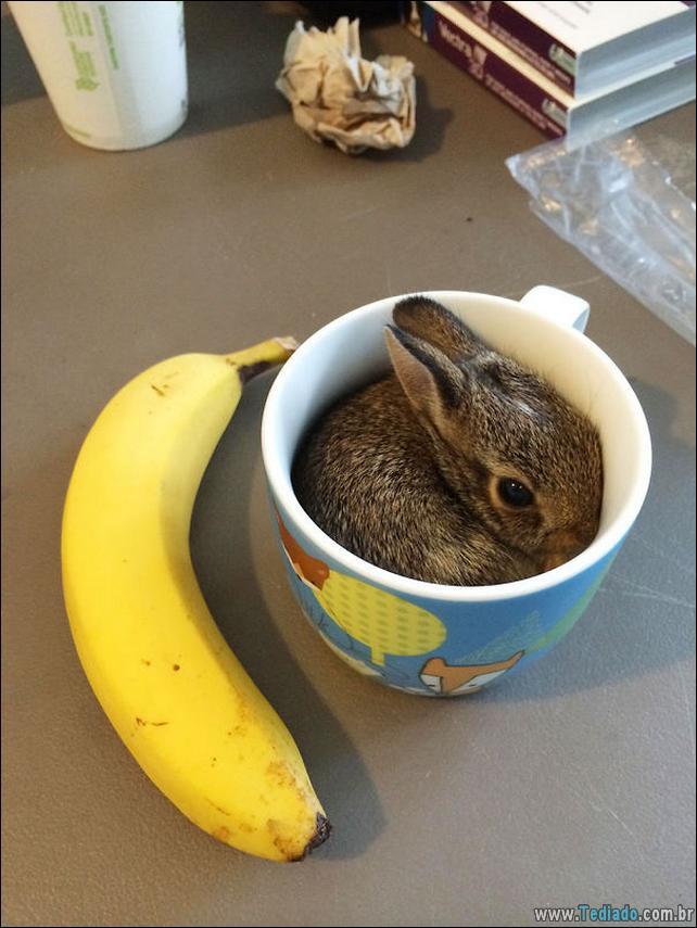 os-coelhos-mais-fofos-do-mundo-09
