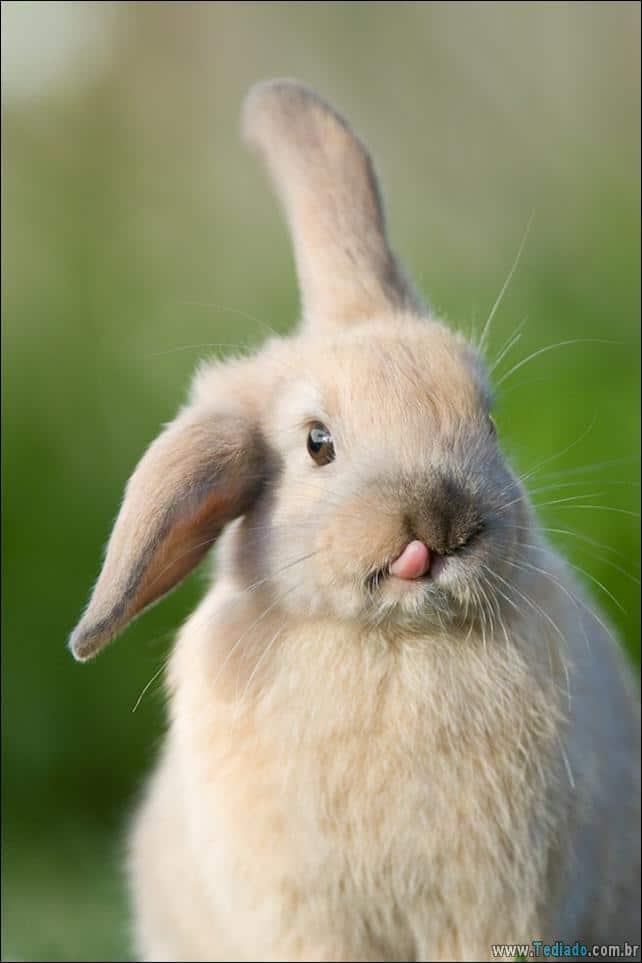 os-coelhos-mais-fofos-do-mundo-10