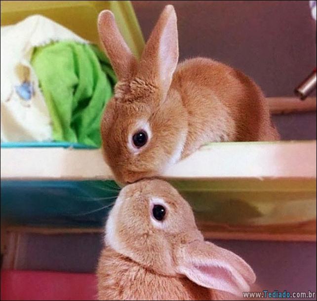 os-coelhos-mais-fofos-do-mundo-11