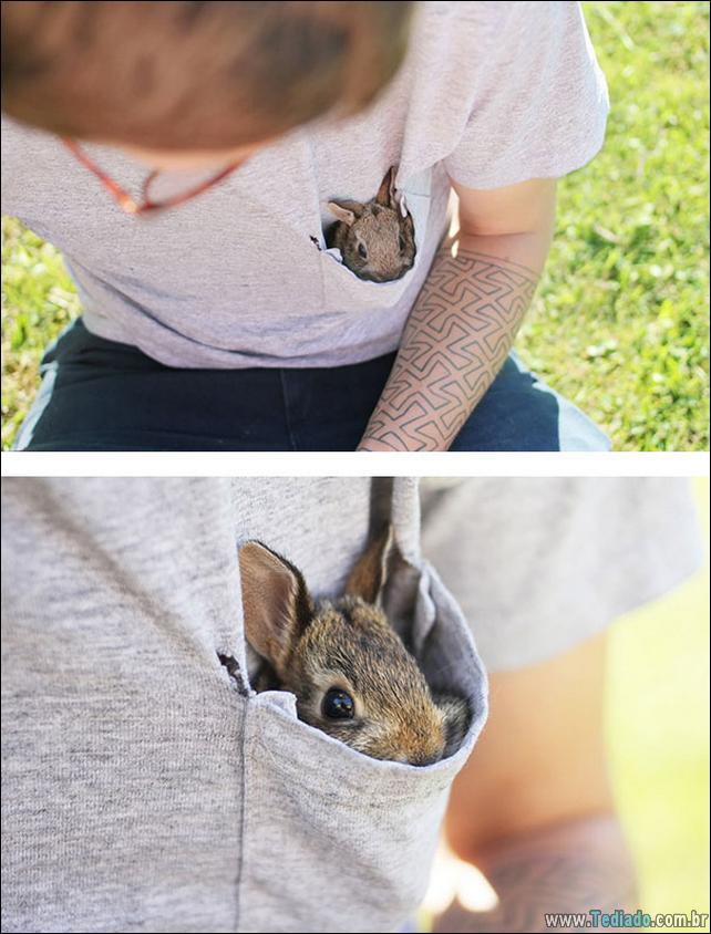 os-coelhos-mais-fofos-do-mundo-12