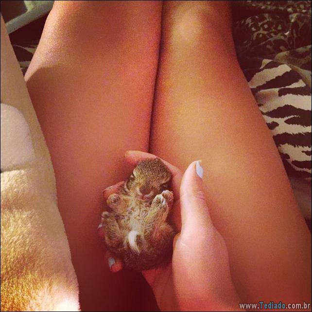 os-coelhos-mais-fofos-do-mundo-13