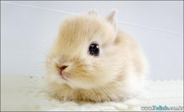 os-coelhos-mais-fofos-do-mundo-14