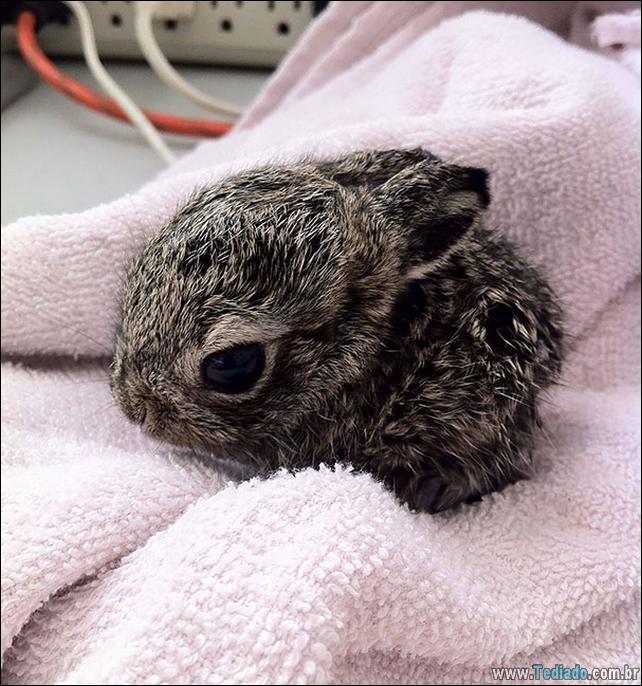 os-coelhos-mais-fofos-do-mundo-15