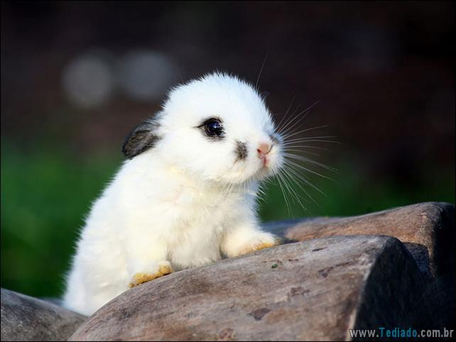 os-coelhos-mais-fofos-do-mundo-16