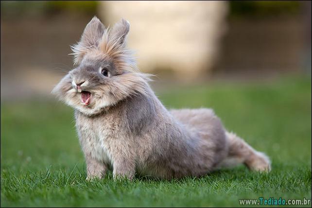 os-coelhos-mais-fofos-do-mundo-17